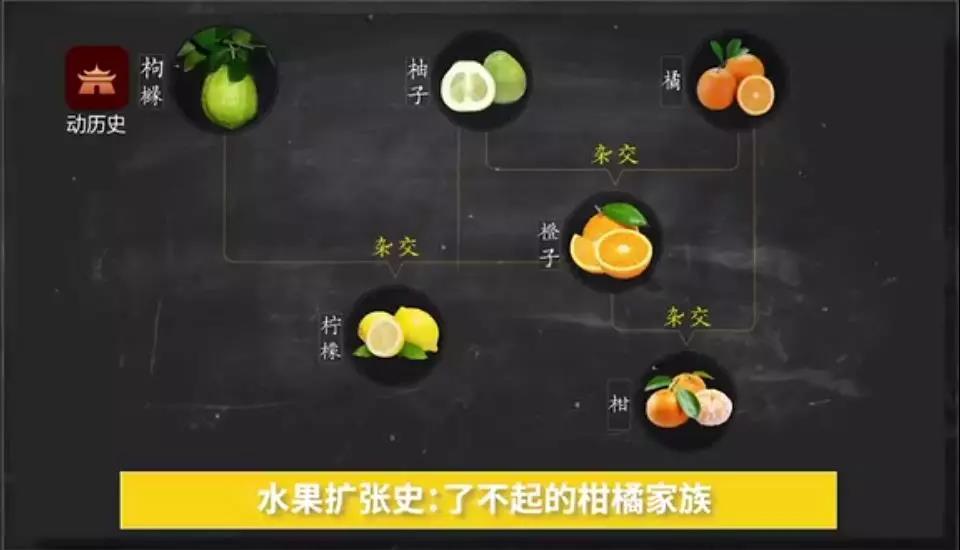 水果扩张史.jpg