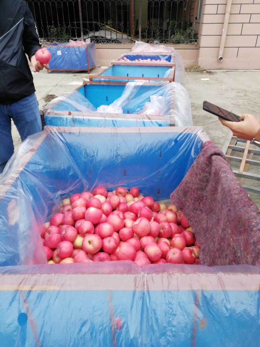 等待进库的果农苹果.jpg